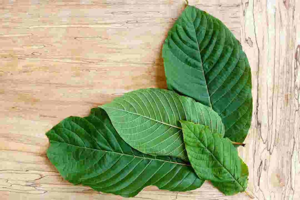white malay kratom