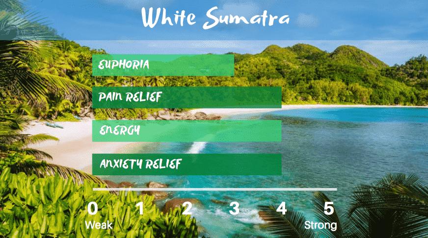 white-sumatra-kratom-for-energy