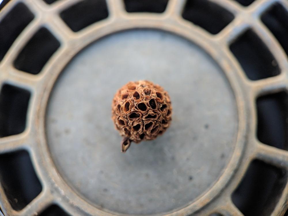 kratom seeds